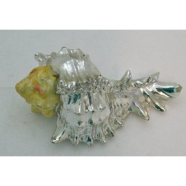 The conch shell, a silver and enamel
